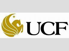 Black Bear Spotted On UCF Campus Environment Local