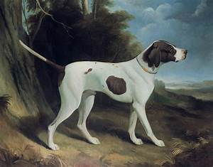 Portrait Of A Liver And White Pointer Painting by George ...