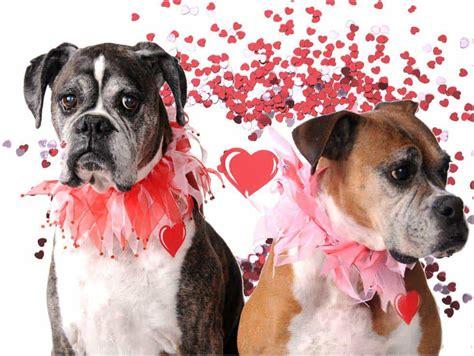 fifteen cutest dogs  love fidose  reality