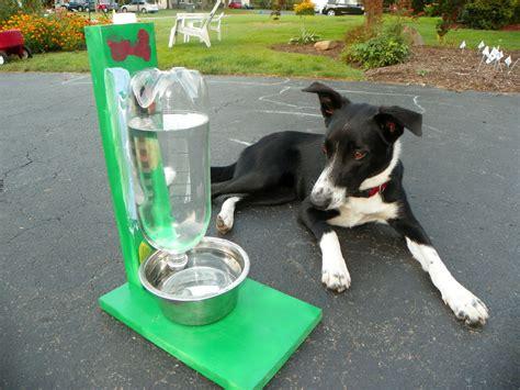 filling pet water bowl