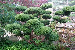 Gartengestaltung Pflegeleichte Gärten : feng shui g rten garten unterberg ~ Sanjose-hotels-ca.com Haus und Dekorationen