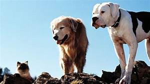 Homeward Bound: The Incredible Journey (1992)
