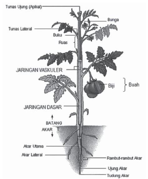 bagian bagian struktur morfologi  anatomi tumbuhan