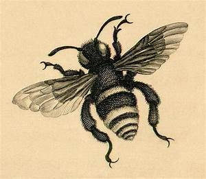 Vintage bee drawing | Designs for Tattoo | Pinterest | Bee ...