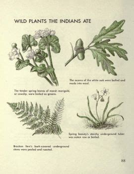 book on plants children s first book of plants science nature children s books pdf classic books