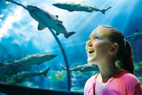 Shark Encounter Seaworld San Diego Discount Tickets