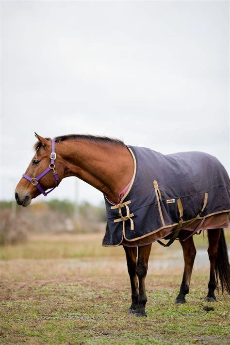 horse blanketing there blankets thickness learned levels recently example blanket ve different medium