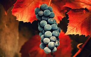 Grapes HD Wallpaper - HD