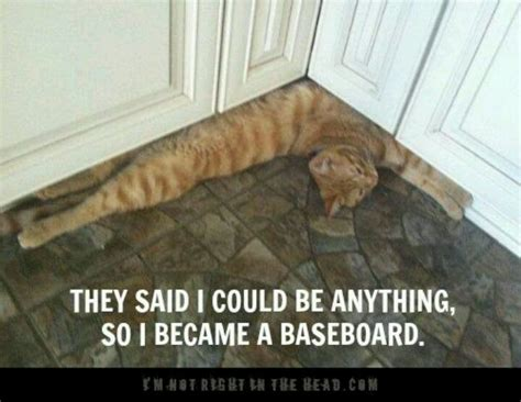 They Said I Could Be Anything Meme - 56 best images about they told me i could be anything on pinterest cats door handles and
