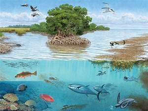 Sorting The Gulf Ecosystem
