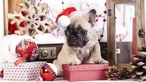 wallpaper puppy animals new year 4k