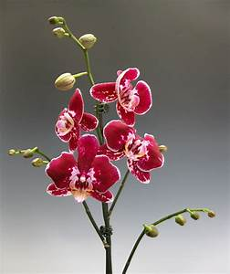 Orchids That Make You Smile  Which One Is Your Favorite