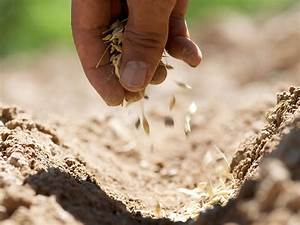 Freebibleimages, Parable, Of, The, Sower, Jesus, Tells, A, Parable, About, A, Sower, Matthew, 13, 1