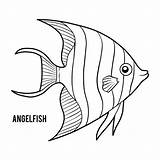 Angelfish Coloring Emperor Illustrations Vector Clip Fish Angel Vectors Children Dreamstime sketch template