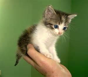 cats adoption cats for adoption