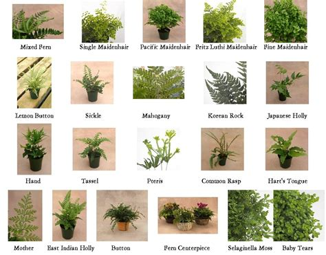 Garden Types : Types Of Ferns 1 10 From 50 Votes 5 54 Picture