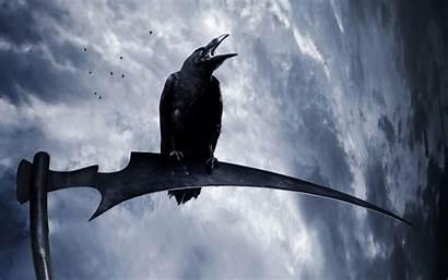Raven Fantasy Scythe Birds Animals Crow Bird