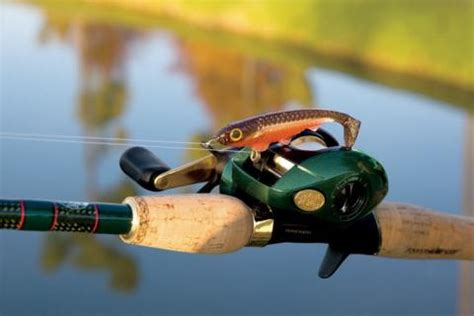 timeless types  fishing reels bass pro shops