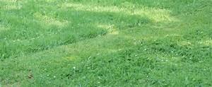 Rasen Wächst Nicht : nassen rasen m hen regenwetter kein problem das gartenmagazin ~ Eleganceandgraceweddings.com Haus und Dekorationen