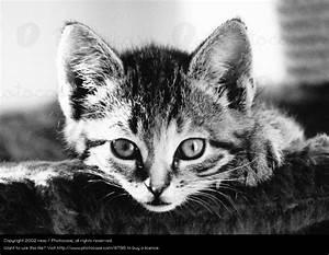 Schwarz Weiß Bilder Tiere : flauschfell schwarz tier ein lizenzfreies stock foto von photocase ~ Markanthonyermac.com Haus und Dekorationen