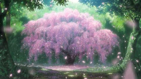 anime cherry blossom tree anime anime cherry blossom