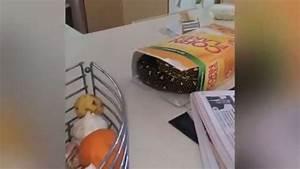 La Boite A Tapis : il d couvre l 39 araign e la plus venimeuse du monde en ~ Dailycaller-alerts.com Idées de Décoration