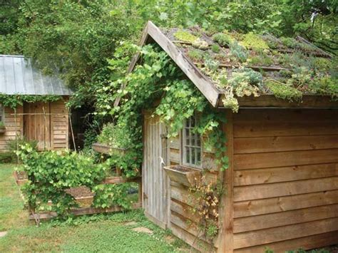 Garden Room With Living Roof by Small Green Roof On A Garden Shed In Raleigh