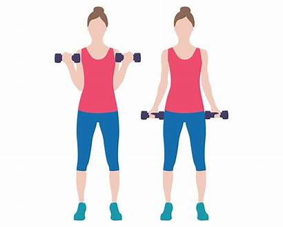 Clipart Bicep Workouts Curl Dumbbell Dumbell Arms