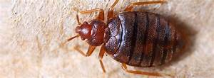 winter pests what you need to know With bed bugs ireland