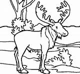 Moose Coloring Pages Getcolorings Printable sketch template