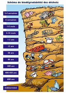 Durée De Vie D Un Moucheron : infographie la dur e de vie des d chets dans la nature ~ Farleysfitness.com Idées de Décoration