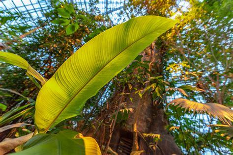 Botanischer Garten Und Botanisches Museum Berlin Dahlem Bgbm by Tropischer Regenwald Botanischer Garten