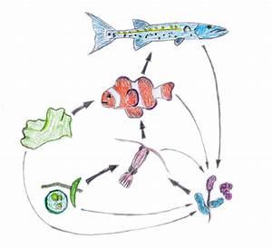 Diagram Of A Food Web