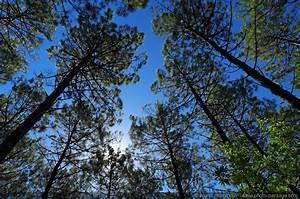 Parquet Pin Des Landes : cliquez ici pour afficher et t l charger le fond d 39 ecran ~ Dailycaller-alerts.com Idées de Décoration