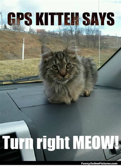 Gps Memes - this is the absolute purrfect way to travel be sure you always have your gps cat with you