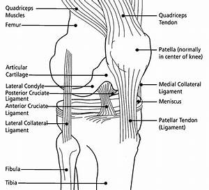 Cog Blog  Knee Pain From Cycling