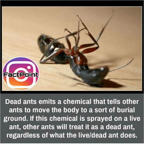 Ant Meme - ants meme 28 images rmx ant by recyclebin meme center ant be like reading pet peeves books