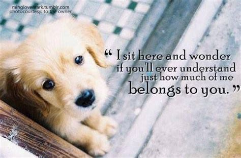pawprints   heart images  pinterest pets