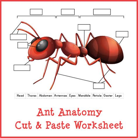 ant anatomy cut paste worksheet gift  curiosity