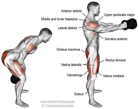Best 25+ Soleus Muscle Ideas On Pinterest