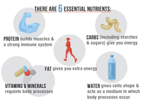 Human Nutrition Essential Macro And Micronutrients