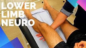 Lower Limb Neurological Examination