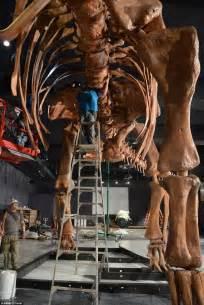 york   titanosaur  natural history museum