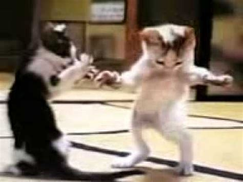 chat arabe qui danse mdrrr youtube