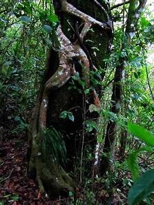 Amazon Rainforest Plants And Trees