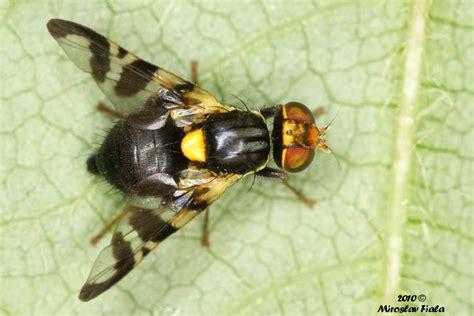 http://www.biolib.cz/cz/image/id127658/