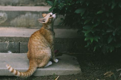 welchen geruch mö hunde nicht welchen geruch m 246 katzen nicht spezialreiniger24 wissen