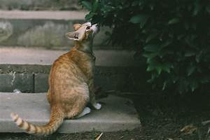 Welchen Geruch Mögen Wespen Nicht : welchen geruch m gen katzen nicht spezialreiniger blog ~ Whattoseeinmadrid.com Haus und Dekorationen