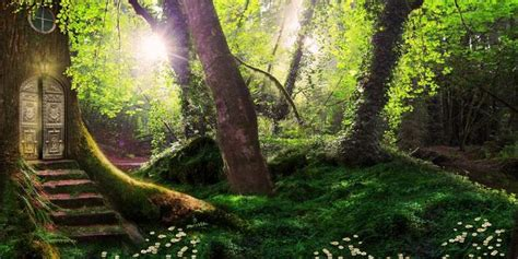 magic forest  wallpaper  android apk