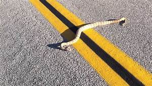 Rattle Snake In Joshua Tree National Park 2 YouTube